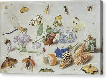 Nature Study Canvas Print - Butterflies And Other Insects, 1661 by Jan Van Kessel