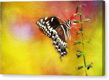 Butterflies Are Self Propelled Flowers Canvas Print by Ches Black