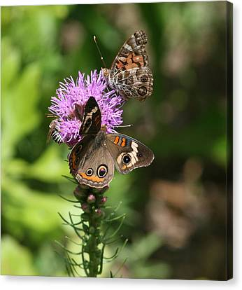 Butterflies And Purple Flower Canvas Print by Cathy Harper