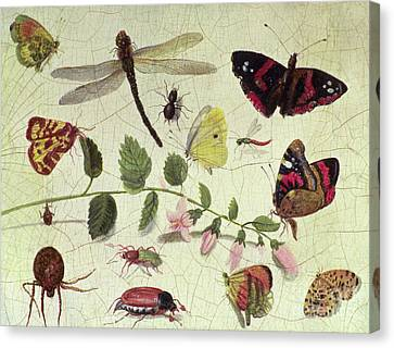 Nature Study Canvas Print - Butterflies, Insects And Flowers by Jan Van Kessel