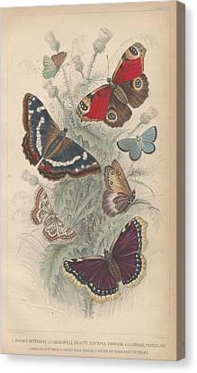 Butterflies Canvas Print by Rob Dreyer