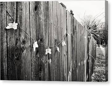 Butterflies On A Rustic Fence Canvas Print
