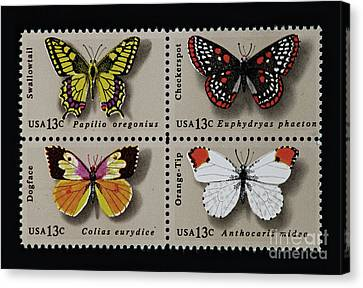 Butterflies Postage Stamp Print Canvas Print by Andy Prendy