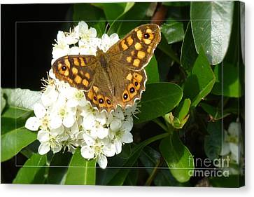 Canvas Print featuring the photograph Butterfly 1 by Jean Bernard Roussilhe