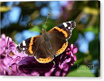 Butterfly 12 Canvas Print by Jean Bernard Roussilhe