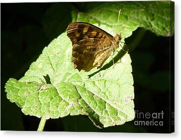 Canvas Print featuring the photograph Butterfly 2 by Jean Bernard Roussilhe