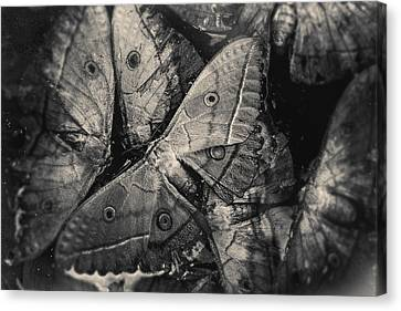 Butterfly #2056 Canvas Print by Andrey Godyaykin
