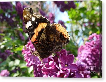 Butterfly 7 Canvas Print by Jean Bernard Roussilhe