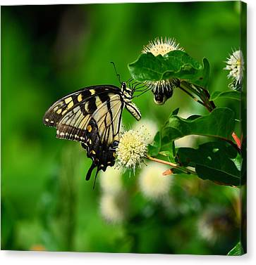Butterfly And The Bee Sharing Canvas Print