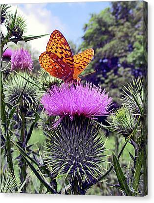 Canvas Print - Butterfly And Thistle Flower by Patricia Keller