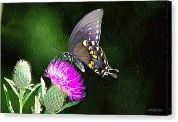 Thistle Canvas Print - Butterfly And Thistle by Jeffrey Kolker