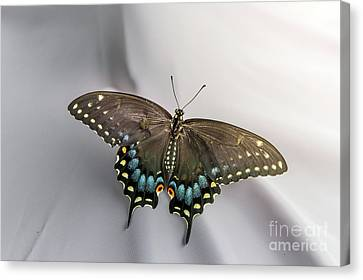 Butterfly At Picnic Canvas Print by Robert Frederick