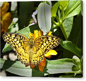 Canvas Print featuring the photograph Butterfly At Rest by Bill Barber
