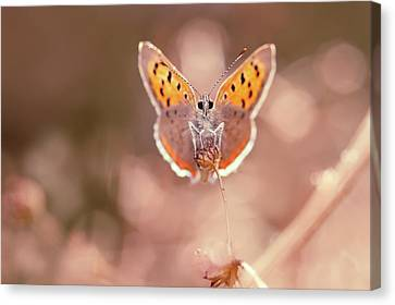 Elf Canvas Print - Butterfly Beauty by Roeselien Raimond