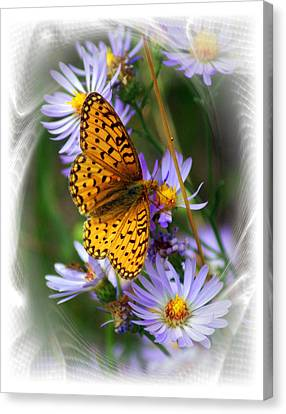 Butterfly Bliss Canvas Print by Marty Koch