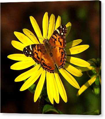Butterfly Bloom Canvas Print