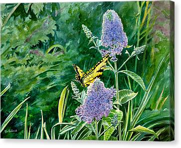 Butterfly Bush Canvas Print by Tom Hedderich