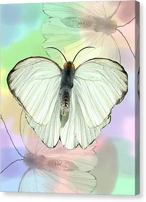 Butterfly, Butterfly Canvas Print by Rosalie Scanlon
