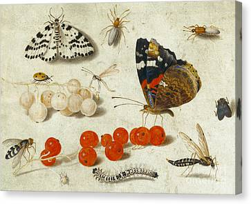 Nature Study Canvas Print - Butterfly, Caterpillar, Moth, Insects And Currants by Jan Van Kessel