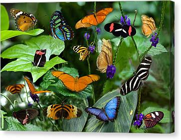 Butterfly Collage Canvas Print by Cabral Stock
