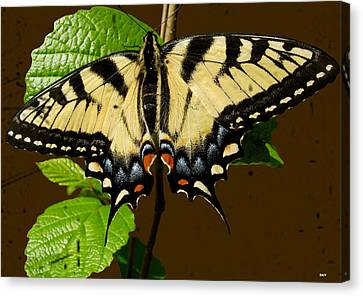 Butterfly Collection Design Canvas Print by Debra     Vatalaro