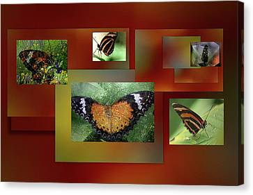 Canvas Print featuring the photograph Butterfly Colllage by Irma BACKELANT GALLERIES