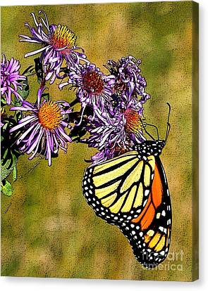 Butterfly Delight Canvas Print by Diane E Berry