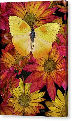 Butterfly Detail Canvas Print by JQ Licensing