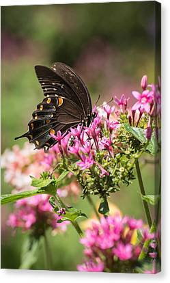 Canvas Print featuring the photograph Butterfly Dream by Julie Andel