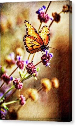 Butterfly Dreams Canvas Print by Saija  Lehtonen