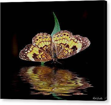 Butterfly Drink Canvas Print by Rick Friedle