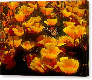 Butterfly Effect Canvas Print by Robby Donaghey