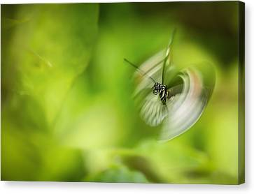 Butterfly In Motion Canvas Print - Butterfly Enegry by Jennifer
