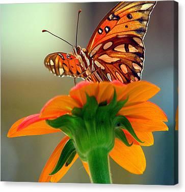 Butterfly Flower Canvas Print by Dottie Dees
