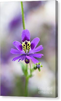 Butterfly Flower Canvas Print