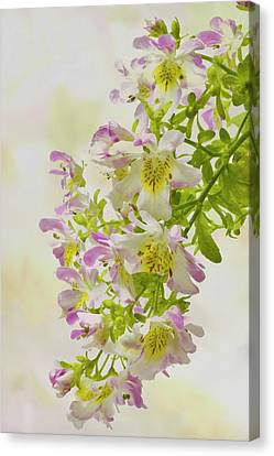 Butterfly Flowers  Canvas Print by Sandra Foster