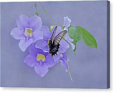 Butterfly Fluttering Canvas Print