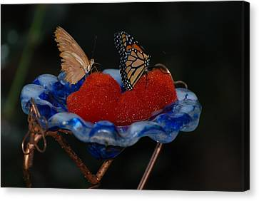 Canvas Print featuring the photograph Butterfly Fruit by Richard Bryce and Family