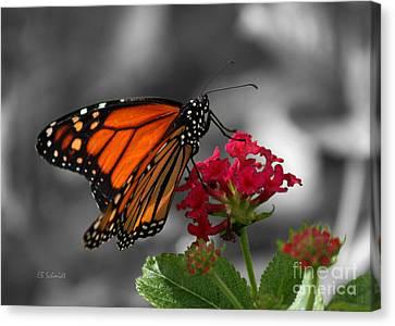Canvas Print featuring the photograph Butterfly Garden 01 - Monarch by E B Schmidt