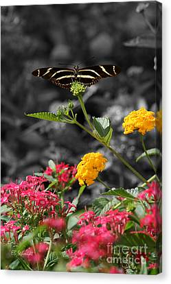 Canvas Print featuring the photograph Butterfly Garden 05 - Zebra Heliconian by E B Schmidt