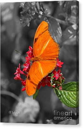 Canvas Print featuring the photograph Butterfly Garden 16 - Julia Heliconian by E B Schmidt