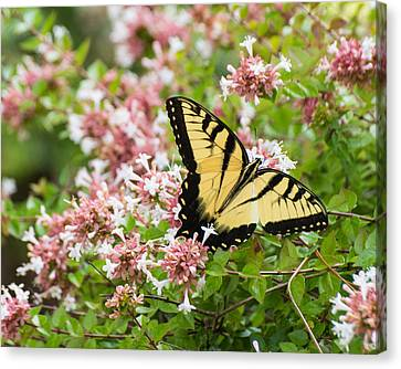 Canvas Print featuring the photograph Butterfly Haven by Julie Andel