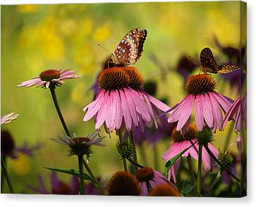 Butterfly In A Field Of Dreams Canvas Print