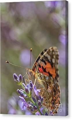 Canvas Print featuring the photograph Butterfly In Close Up by Patricia Hofmeester