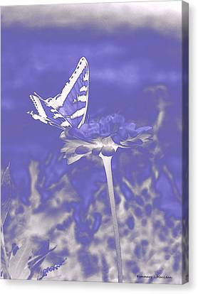 Butterfly In The Mist Canvas Print
