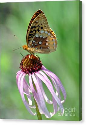 Butterfly In The Wind Canvas Print by Marty Koch