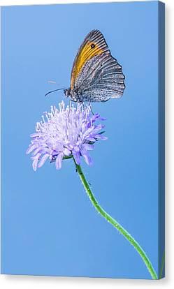 Canvas Print featuring the photograph Butterfly by Jaroslaw Grudzinski