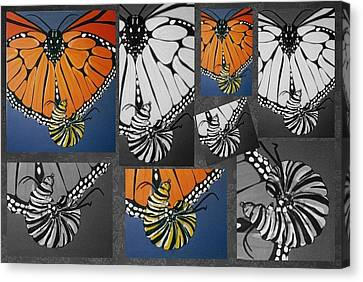 Canvas Print - Butterfly by Joan Stratton
