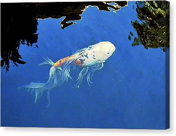 Butterfly Koi In Blue Sky Reflection Canvas Print