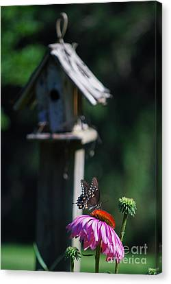 Canvas Print featuring the photograph Butterfly by Lila Fisher-Wenzel